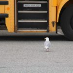 What Should I Keep in Mind When Driving Through School Zones?